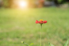 Schöne Blumen mit Sonnenlicht Lizenzfreie Stockfotos