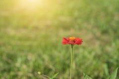 Schöne Blumen mit Sonnenlicht Stockfotos