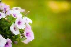 Schöne Blumen mit Unschärfegrünhintergrund Stockfotos