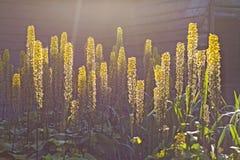 Schöne Blumen nahe dem Haus lizenzfreie stockbilder