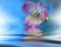 Schöne Blumen reflektierten sich im Wasser, Badekurortkonzept Stockfotos