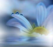 Schöne Blumen reflektierten sich im Wasser, Badekurortkonzept Stockbild
