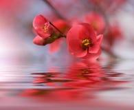 Schöne Blumen reflektierten sich im Wasser, Badekurortkonzept Lizenzfreie Stockfotos