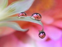 Schöne Blumen reflektierten sich im Wasser, künstlerisches Konzept Ruhige abstrakte Nahaufnahmekunstphotographie Blumenphantasied Lizenzfreie Stockbilder