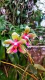Schöne Blumen und Anlagen an grandma' s-Hinterhofhaus #4 lizenzfreies stockbild
