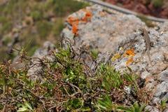 Schöne Blumen und Eidechse auf dem Stein stockfoto