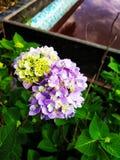 Schöne Blumen und Hintergrund ein Pool lizenzfreie stockbilder