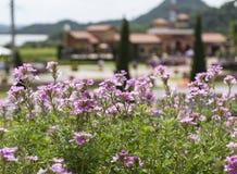 Schöne Blumen und unscharfer Weinberg Lizenzfreie Stockfotos
