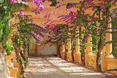 Schöne Blumen unter den Spalten Stockfoto