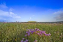 Schöne Blumen unter einem großen blauen Himmel stockfotos