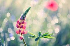 Schöne Blumen vom Garten in den attraktiven Sommerfarben lizenzfreie stockbilder