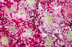 Schöne Blumen von Herbst 2017 Stockfoto