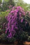 Schöne Blumen von Thailand stockbild