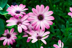 Schöne Blumen während des Frühlinges Stockfotografie