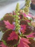 Schöne Blumen zu Hause, Parks und in den Wiesen stockbilder