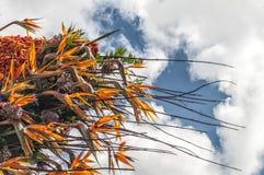 Schöne Blumenanordnung mit vielen Farben lizenzfreie stockfotos