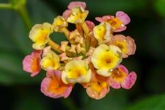 Schöne Blumenblumenblätter Stockfotos