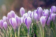 Schöne Blumengruppe Junge Blumen mit den ungeöffneten empfindlichen Knospen lizenzfreie stockfotos