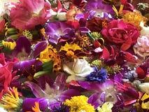 Schöne Blumenmehrfachverbindungsstellenfarben lizenzfreie stockfotografie