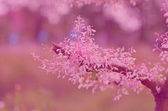 Schöne Blumenmuster Weinlese-Hintergrundunschärfe für Steigung Stockbilder