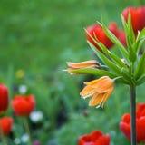 Schöne Blumennahaufnahme Lizenzfreie Stockfotos