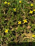 Schöne Blumennatur ist schön Stockfotos