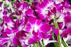 Schöne Blumensträuße von den purpurroten und weißen Orchideenblumen gestapelt auf Anzeige am Blumenmarkt lizenzfreies stockbild