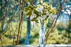 Schöne Blumenstrauß ofPrunus Blüten im Vase Lizenzfreies Stockbild