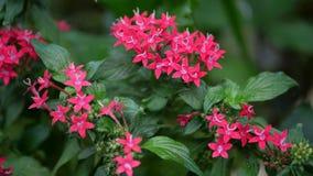 Schöne Blumentapete mit roten Blumen Lizenzfreies Stockbild