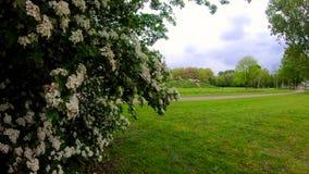 Schöne Blumenzeitlupe-Effekt 240 fps stock video