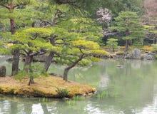 Schöne Bonsaibäume in einer japanischen Art arbeiten im Garten Stockfotografie