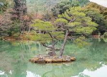 Schöne Bonsaibäume in einer japanischen Art arbeiten im Garten Stockbilder