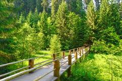 Schöne Brücke im Wald mit Strahlen der Sonne an stockfoto