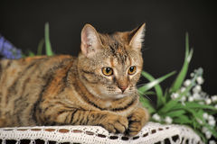 Schöne braune Katze unter den Blumen Stockbilder