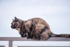 Schöne braune und schwarze Katze Stockfoto