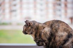 Schöne braune und schwarze Katze Stockfotografie