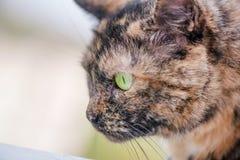 Schöne braune und schwarze Katze Lizenzfreies Stockbild