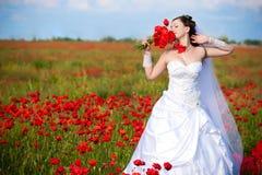 Schöne Braut auf einem Mohnblumegebiet stockfotos