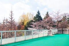 Schöne bunte Baumlandschaft mit Brücke Stockfotos