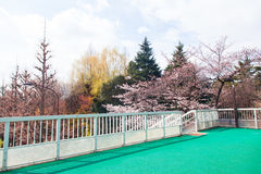 Schöne bunte Baumlandschaft mit Brücke Stockfotografie