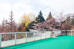Schöne bunte Baumlandschaft mit Brücke Lizenzfreies Stockfoto