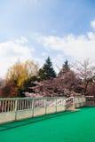 Schöne bunte Baumlandschaft mit Brücke Stockbild