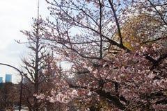 Schöne bunte Baumlandschaft mit Brücke Lizenzfreies Stockbild