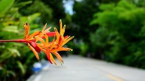Schöne bunte Blume Stockfoto