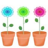 Schöne bunte Blumen Stockfotos