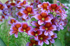 Schöne bunte Blumen Stockfoto
