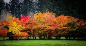 Schöne bunte Fall-Bäume Lizenzfreies Stockbild