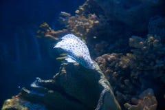 Schöne bunte Fische im Aquarium, Vietnam Lizenzfreies Stockfoto