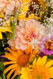 Schöne bunte Sammlung der Blumenfrühlings-Sommerfeier Lizenzfreies Stockfoto