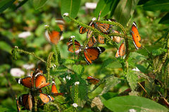 Schöne bunte Schmetterlinge Stockfoto